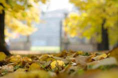 yellow by gabrielesala78. Please Like http://fb.me/go4photos and Follow @go4fotos Thank You. :-)
