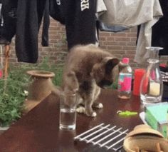 21 Best GIFs Of All Time Of The Week #114