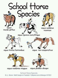 If you are a horse person, you may have owned or worked with a few of these horses!