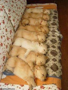 Huggie naps!