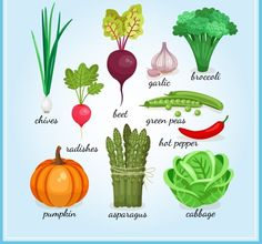 Healthy fresh vegetables icons by Microvector on Creative Market