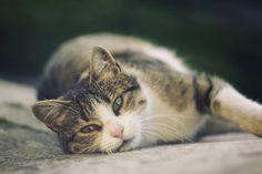 Lihat aja pun si kucing ini -_-