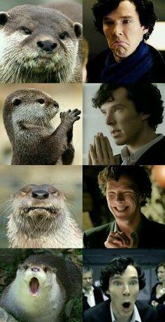 Sherlock Bbc, Sherlock Otter, Quotes Sherlock, Sherlock Holmes Benedict Cumberbatch, Sherlock Fandom, Benedict Cumberbatch Sherlock, Sherlock Holmes John Watson, Johnlock, Martin Freeman