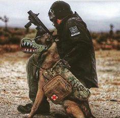 P40 War Dog