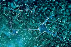 Read more about Baylor College of Medicine and UCB collaborating to discover therapies for ALS and other neurodegenerative diseases.