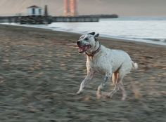 Good Dog For Life - Personal Trainer for Dogs & Owners!  :)  Have worked 1 on 1 with Sabrina - she is AMAZING!  She is also available for Q by e-mail and has wonderful ideas for behavior and problem solving.  Serving the Bay Area.