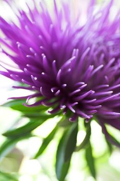 Abstract purple aster flower Photographic Print by Abby Rex at Art.com