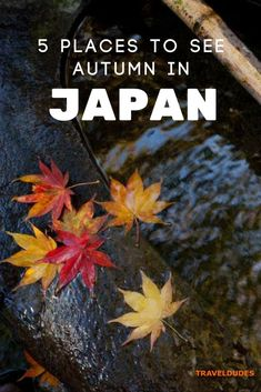 5 Places to See Autumn Leaves in Japan - First there is the beautiful scenery, turned white under a blanket of snow in winter, wreathed in pink cherry blossoms in spring, bright green and lush in summer, and striking reds and oranges in autumn TravelDud Japan Destinations, Amazing Destinations, Japan Travel Tips, Asia Travel, Travel Guide, Autumn Leaves Japan, Fall Leaves, Places To Travel, Places To See