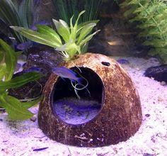 Aquarium Fish Food Tips Planted Aquarium, Aquarium Fish Food, Diy Aquarium, Aquarium Design, Aquarium Fish Tank, Nano Aquarium, Fish Tanks, Terrariums, Aquarium Stand