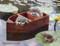 little adventurers by Elena Eremina on 500px