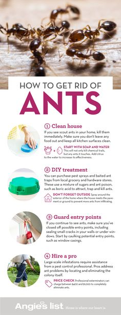 how to kill ants in house naturally