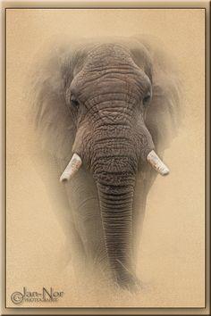 The Elephant: Grunge Effect Grunge, Elephant, Photography, Animals, Photograph, Animales, Animaux, Fotografie, Elephants