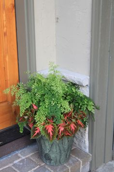 Not blooms but a beautiful combo, Maidenhair Fern and Coleus, Don't need blooms to be beautiful!!