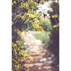 Doğa  #nature #TagsForLikes #sky #sun #summer #beach #beatiful #pretty #sunset #sunrise #blue #flowers #night #tree #twilight #clouds beauty #light #cloudporn #photooftheday #love #green #skylovers #dusk #weather #day #red #kaş #antalya