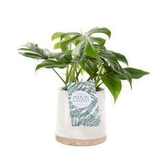 Green lifestyle store MONSTERA MINIMA INCL. 'CERAMIC FACE' POT Urban Loft, Lifestyle Store, Ceramics, Plants, Home Decor, Groot, Nice, Products, Seeds