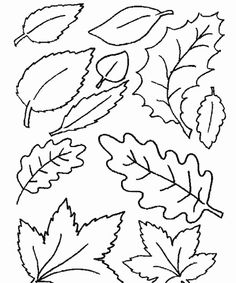 free leaf coloring page leaf coloring pages 7 printable coloring page - Leaves Coloring Pages