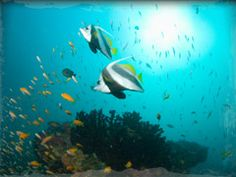 For jet-setting scuba divers, Mozambique offers four secluded islands with great coral reefs and clear waters. It also offers ship wreck exploration and night diving where you can swim through sunken ships or swim along with curious dolphins. Scuba Diver Costume, Places To Travel, Places To Visit, Scuba Diving Gear, Pictures Of People, Cool Countries, Africa Travel, Sea Creatures, Snorkeling