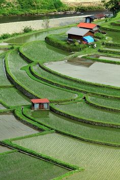 Aragijima Terraced Rice Fields, Wakayama, Japan|あらぎ島 I would love to terrace my yard like this.
