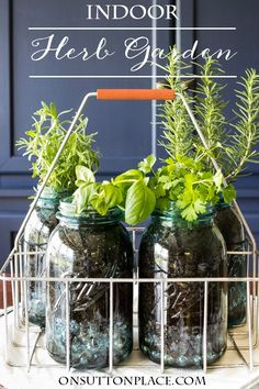 Indoor Mason Jar Herb Garden | The perfect way to have fresh herbs in your kitchen all the time. Easy and DIY.