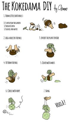 Kokedama - Hanging plants on moss ball - DIY by Clemmo Around the World. Click to see the pictures ;)