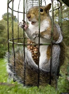 Photo: Squirrel Gets Trapped In Bird Feeder