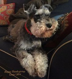 Louie!  Thanksgiving 2014 -dtgardengirl