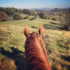 best view..., Yes, the best view is from the back of a horse!