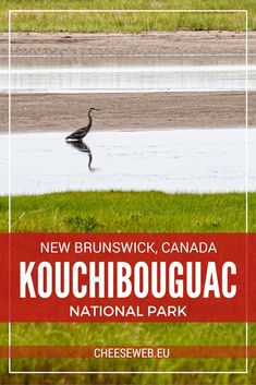 We share eight reasons to visit Kouchibouguac National Park in New Brunswick, Canada from pristine sandy beaches to active outdoor adventures. New Brunswick Canada, Slow Travel, Family Travel, Visit Canada, Canada Travel, Australia Travel, Travel Essentials, Outdoor Travel, Adventure Travel