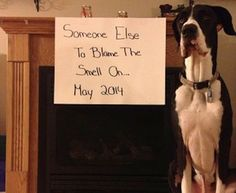 10 Furry Sibling Announcements - Coming up with the perfect baby announcement should be fun and exciting, of course -- something to always remember. Here's one creative way you can share the big news with family and friends: use the family pet!