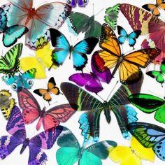 Exotic Butterflies 1