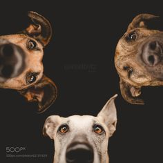 """Photograph """"Is she still sleeping?"""" by Elke Vogelsang on 500px"""