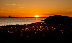 Newfoundland, Windsor, Celestial, Art Prints, Sunset, Outdoor, Art Impressions, Outdoors, Newfoundland Dogs