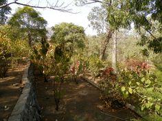 Une allée du jardin..Santiago - Cap Vert