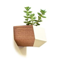 Succulents aren't going anywhere. These adorable, stylish, easy-to-care-for plants are having a major moment. Now, they're being showcased in even more inventive ways. This planter attaches to a wall w...  Find the Succulent Sidecar Planter, as seen in the Venice Beach Bungalow Collection at http://dotandbo.com/collections/venice-beach-bungalow?utm_source=pinterest&utm_medium=organic&db_sku=112523
