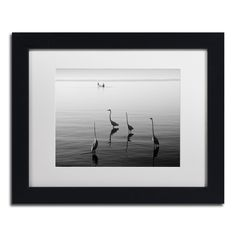 Moises Levy '4 Herons and Boat' White Matte, Framed Canvas Wall Art