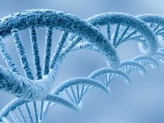 Your genes are not your destiny - How lifestyle will effect your gene expression.
