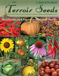 Terroir Seeds – We are a family owned independent heirloom seed company offering the finest untreated heirloom vegetable, herb and flower seeds for home gardeners and small growers. We offer heirloom and open pollinated seeds, soil building and seed saving education combined with personal service, great selection and fast shipping.