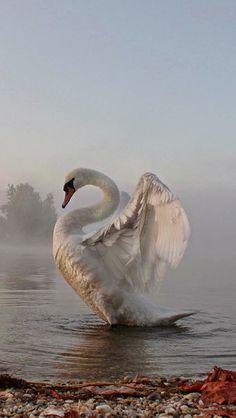 Animals and pets Animals and pets Animals wild Pretty Birds, Beautiful Birds, Animals Beautiful, Beautiful Swan, Hello Beautiful, Nature Animals, Animals And Pets, Cute Animals, Wild Animals