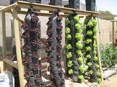 Aquaponics System For You Aquaponics System, Aquaponics Diy, Grapevine Growing, Vegetable Garden Design, Plantation, Growing Plants, Garden Projects, Garden Inspiration, Organic Gardening
