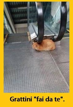 Cat Lovers Community - Your Daily Source of Cat Stories and Funny Cat Memes Animals And Pets, Funny Animals, Cute Animals, Animals Photos, Crazy Cat Lady, Crazy Cats, I Love Cats, Cute Cats, Funny Animal Pictures