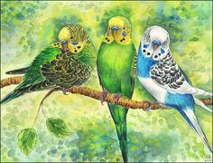 Original Aquarell Bild Wellensittiche Papageien von MasterfulArt