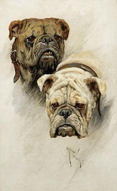 Arthur Wardle, RI (British, 1864-1949) Bulldogs 22 1/4 x 14 1/4in (54 x 36cm)