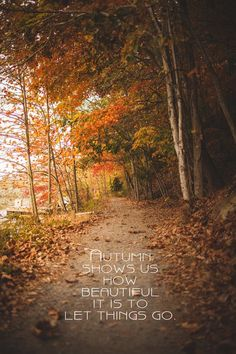 Lovely autumn trees along a woodland path. Fall Pictures, Fall Photos, October Pictures, Random Pictures, Leaf Quotes, Tree Quotes, Autumn Aesthetic, Nature Artwork, Autumn Trees