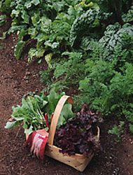 Growing your own #vegetables is all about consistency. Here are 10 steps to having a productive vegetable #garden.