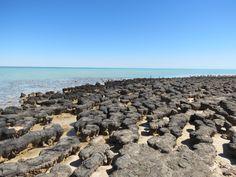 stromatilites