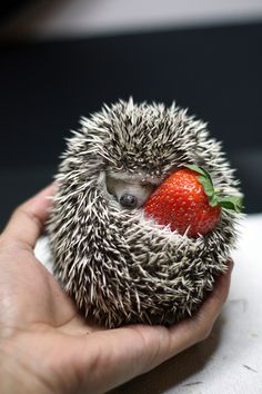 Hedgehog n Strawberry