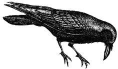Raven   Clipart Etc
