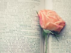 book love rose photography / flower text print rose by shannonpix Rose Photography, Still Life Photography, Photography Books, Photography Backdrops, Aerial Photography, Vintage Photography, Creative Photography, Amazing Photography, Photography Ideas