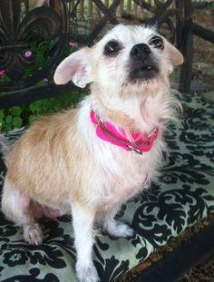 Hi!  My name is Ragamuffin. I was found stray running through a neighborhood and a nice lady picked me up and brought me to the rescue. No one ever came looking for me or posted any signs, so now I'm looking for a nice retirement home. The rescue...