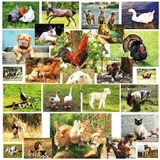 variety of animal pictures Farm Animals, Cute Animals, Agriculture, Animal Pictures, Diversity, Challenge, Google, Farm Gate, Products